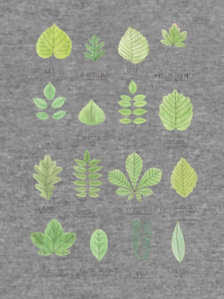 Leaf ID Chart by lhollyberry