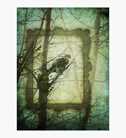 Bird in a Tree Photographic Print