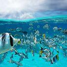 School of tropical fish by Dam - www.seaphotoart.com