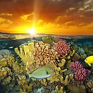 Sunset sky and colorful coral reef fish underwater by Dam - www.seaphotoart.com