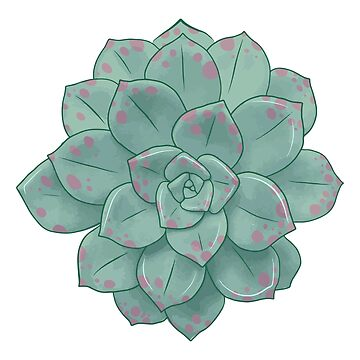 Large Pastel Succulent Illustration by annaleebeer