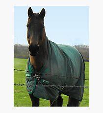 Brown Horse Fotodruck