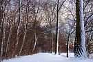Snowy Trees by AnnieSnel