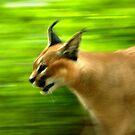 Lynx on the Run by Lisa G. Putman