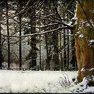 Snow Textures by Ann Garrett