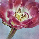 ~ textured tulip ~ by Adriana Glackin