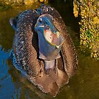 Brown Pelican Closeup by TJ Baccari Photography