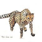 Cheetah by Meaghan Roberts