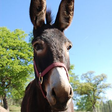 A donkey by LisaRent