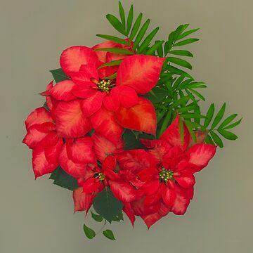 Poinsettia Arrangement by Osso