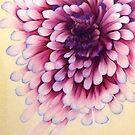 Chrysanthemum by MarinaDekker