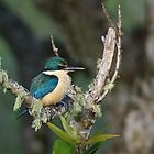 Sacred kingfisher by Lee Fennell
