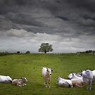 9 cows to Tree by Tim  Geraghty-Groves