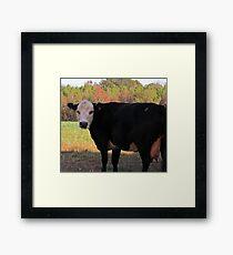 White Face Cow Framed Print