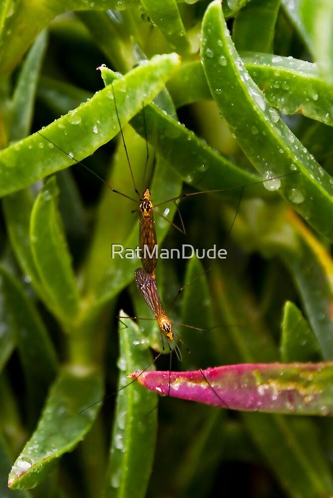 A Pair of Mating Crane Flies by RatManDude