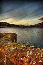 Moss n' Lichen by Karl Williams