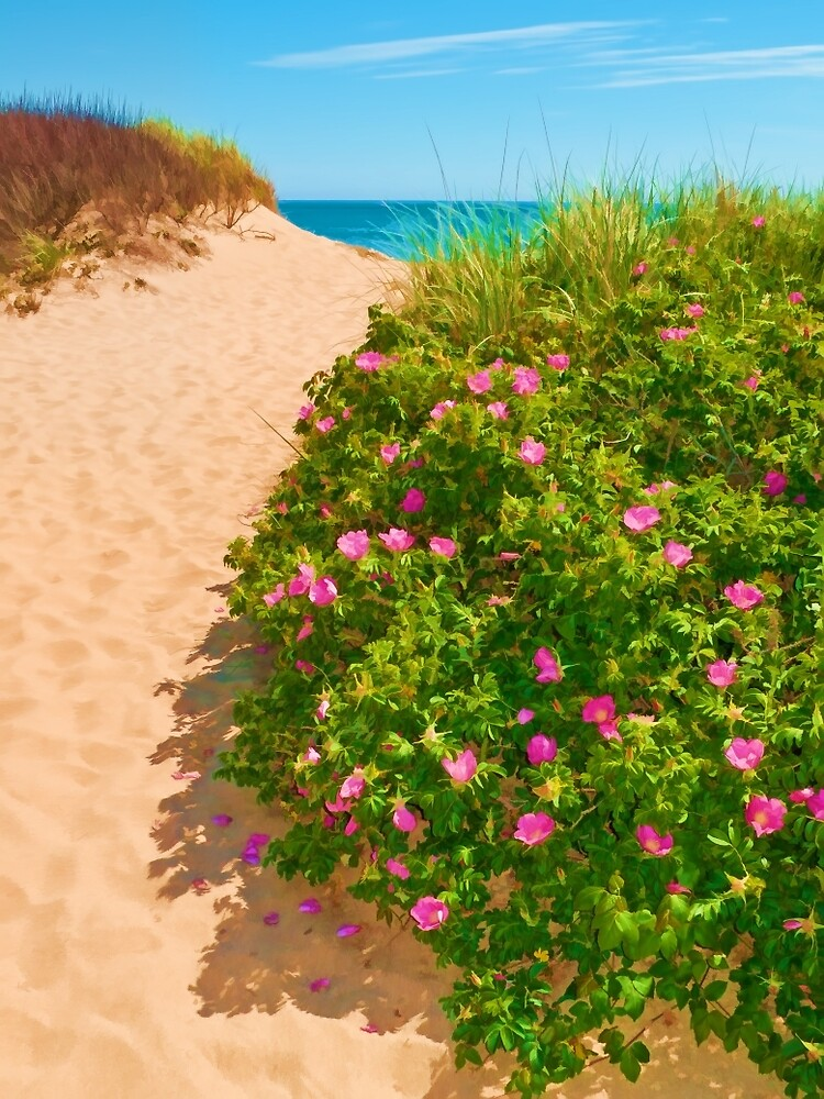 P-town Dunes by Tom Nelson
