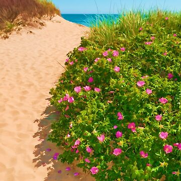 P-town Dunes by tnelson612