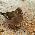 Wretling With Sunflower Seeds by Robert Abraham