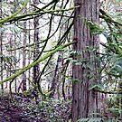 Cedar in oils by TerrillWelch