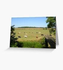 Grazing cows - Buckinghamshire Greeting Card