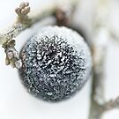 Sloe Frost by Andy Freer