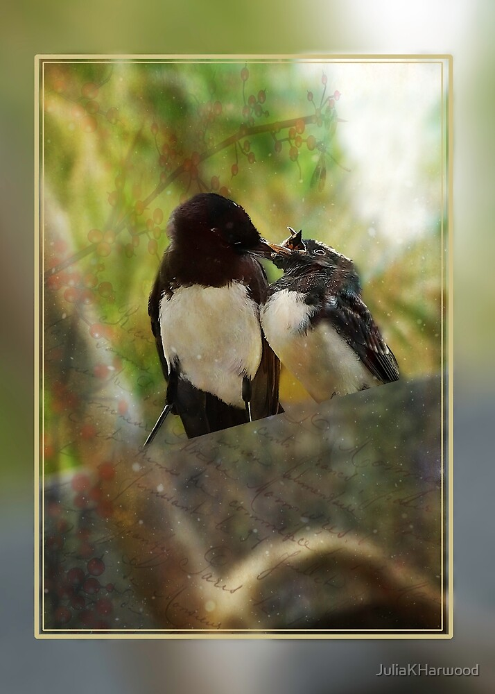 Willy wagtail feeding baby by JuliaKHarwood