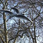 Two seaguls over my head by Themis