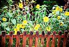 sunflower garden by Juilee  Pryor