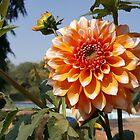 Blüte im Winter mittag von FurwaAbid