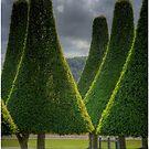 dada trees by Murray Swift