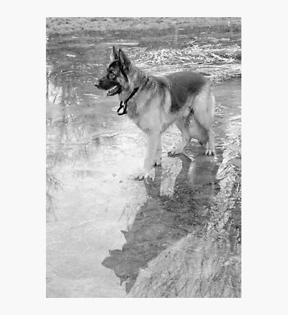Walking on Frozen Waters Photographic Print