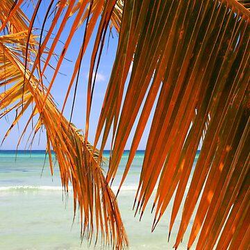 Palm Leaf by diktattoor