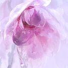 Magnolia Ice by Ann Garrett