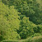 British Countryside by FraserJ