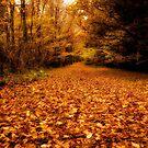 Teppich des Herbstes am Stover Country Park, Newton Abbot von Jay Lethbridge