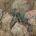 Rocks in Hiding by Harry Oldmeadow