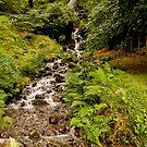 Wasserfall bei Burrator Reservoir von Jay Lethbridge