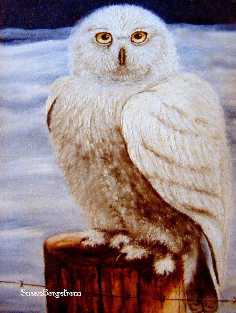 Snowy Owl by Susan Bergstrom