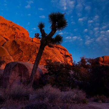 Glowing Rocks, Joshua Tree by shubat