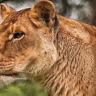 ! Zoos & Wildlife Parks UK !