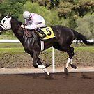 Racing Horse by Jo McGowan