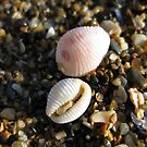 tiny shells by millymuso