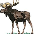 Moose With Big Rack Of Antlers by Zehda