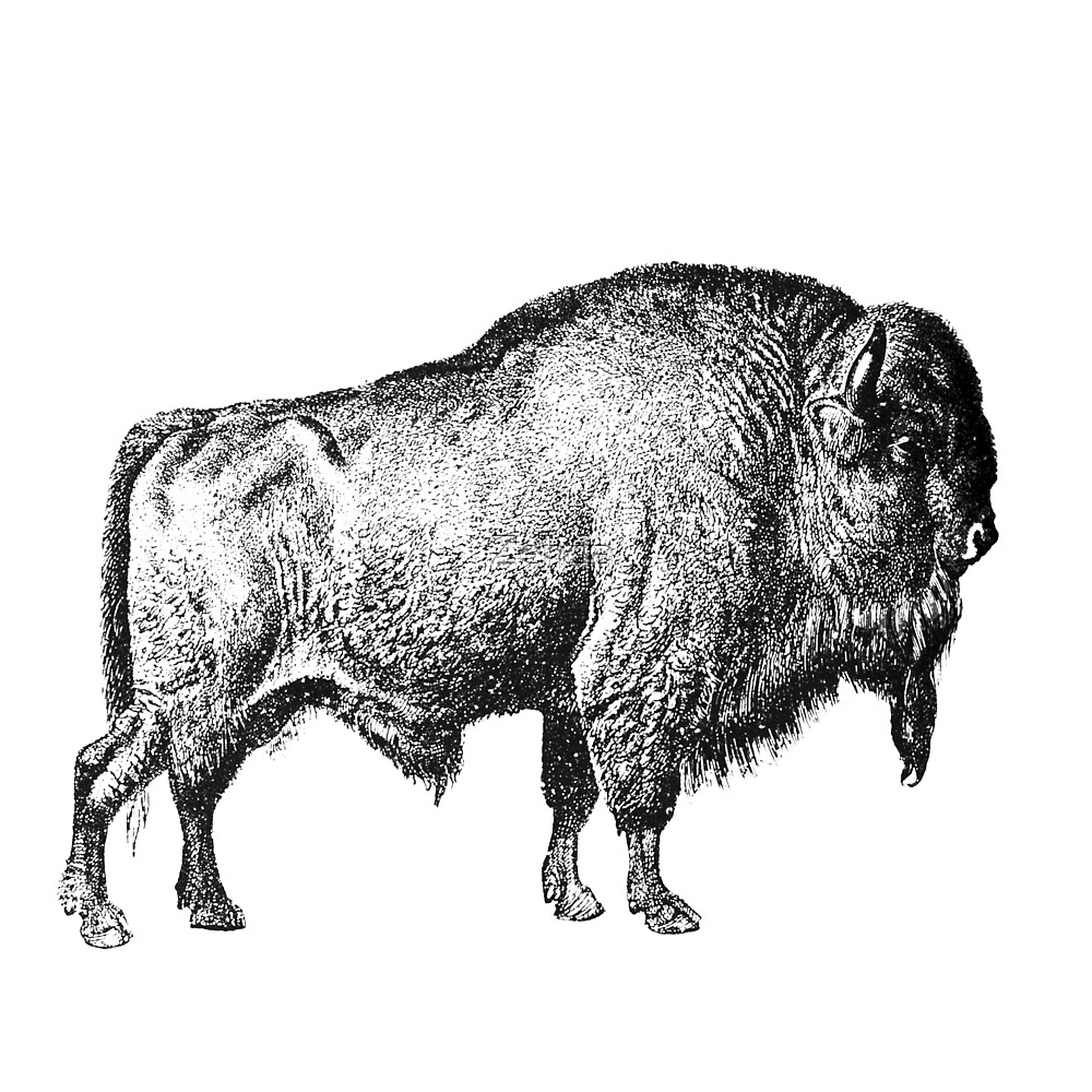 Bison Buffalo by Zehda