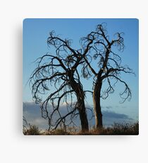 Gnarly Trees Canvas Print