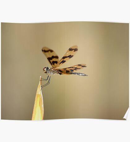 golden dragonfly Poster