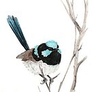 Superb Blue Wren by Meaghan Roberts