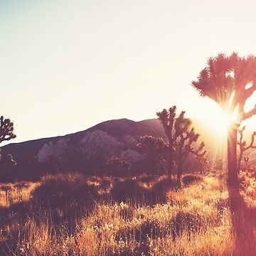 Joshua Tree Dreams by CaliforniaPhoto