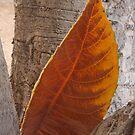 Winter Leaf by tomryan